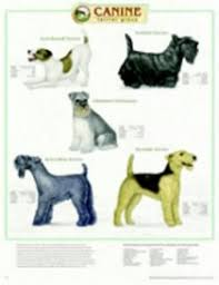 Terrier Size Chart Canine Terrier Group Chart Anatomical Chart Company Acc