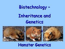 Biotechnology Inheritance And Breeding