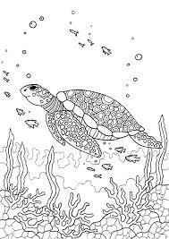 Kleurplaat Ninja Turtles Prachtig Moon Turtle Mandalas Craft
