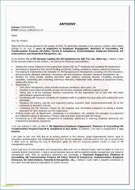 Sample Resume Visual Basic Programmer New Resumes Templates Cfo