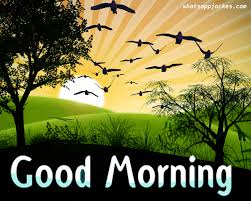 Motivational Quotes Good Morning In Hindi With Gud Gud Mrng Quotes