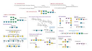 Symbol Nomenclature For Glycans Snfg Ncbi