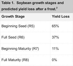 Soybean Frost Damage