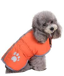 The 25 Best Dog Coats Of 2019 Pup Life Today