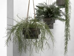 Hanging Pots with Plants