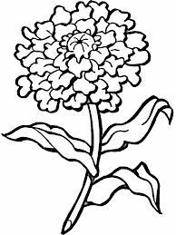 Disegni Floreali Da Stampare Az Colorare