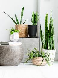 in love with Indie Home Collective styling! Plants IndoorPot ...
