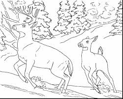 Small Picture remarkable realistic animal coloring pages with animal color pages