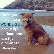 13 dog loss es comforting words