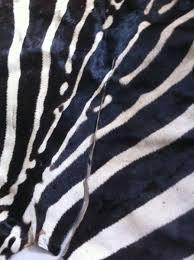real zebra skin rug ivory coast