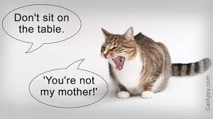 50 cute and funny cat pictures with