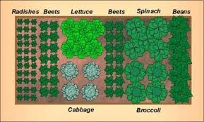 Small Picture Small Vegetable Garden Layout erikhanseninfo