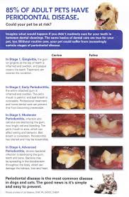 Dog Teeth Health Chart Periodontal Disease In Cats And Dogs Canberra Veterinary