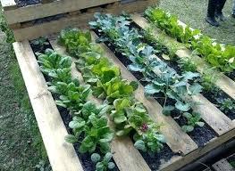 best garden vegetables. Urban Vegetable Garden Ideas Best Gardening Images On Vegetables And Decks