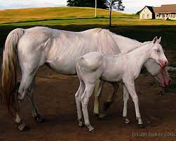 white baby horses playing. Plain Playing White Horses Painting  Baby Horse By Jill Baker Throughout Playing