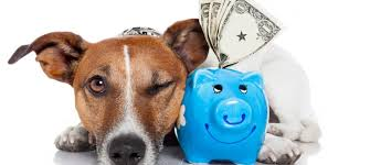 pet insurance quote comparison australia raipurnews
