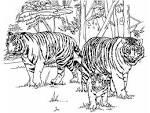 Раскраска львы тигры