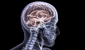 Image result for older adult brain
