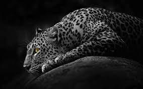 Black Jaguar Wallpaper on WallpaperSafari