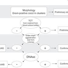 Flowchart For Identifying Gram Positive Cocci In Clusters
