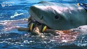 great white sharks eating people alive. Delighful White Great White Shark Eating People Alive  Photo5 Intended White Sharks Eating People Alive