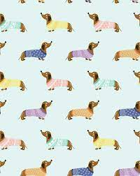99 Sausage Dog ideas
