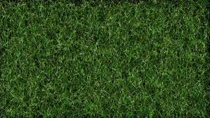 Grass background Blur Photo Green Grass Background Public Domain Pictures Photo Green Grass Background Free Stock Photo Public Domain Pictures