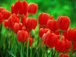 Flower Wallpapers  Images?q=tbn:ANd9GcTW7Oqy4Lzml-UioPmxaYgl4kXfR0qrD7xOomPSYUIP0fsZoVmy