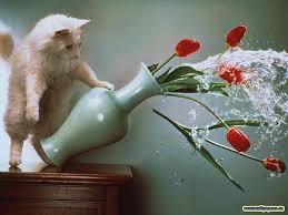 Коты и кошки. Кошка в доме - других украшений не нужно!
