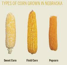 Growing Popcorn Business Is Poppin For Nebraska Popcorn Producers Farm Flavor