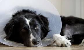 95% of claims paid in 2019 directly to policyholders or their vet. Pet Insurance How To Get The Best Value Policy For Your Dog Pet Insurance The Guardian