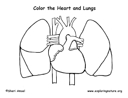 Small Picture Human Heart Coloring Pictures For Kids Health Pictures of Anatomy