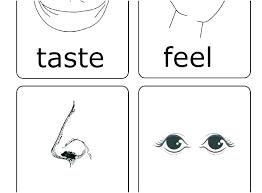 Five Senses Worksheets For Preschoolers Free Five Senses Worksheets