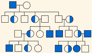 For the above pedigree, what are the sexes of. Https Lhsblogs Typepad Com Files Pedigree Analysis And Practice Key Pdf