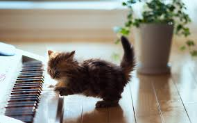 cute kittens sleeping on pianos. Fine Cute This Is The Most Adorable Picture Ever A Cute Tiny Little Cat Playing Piano  Your Background Screens Are Going To Light Up For Sure In Cute Kittens Sleeping On Pianos I