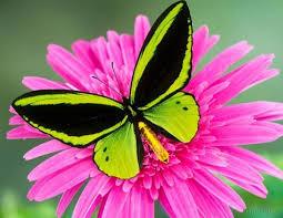 نتیجه تصویری برای پروانه