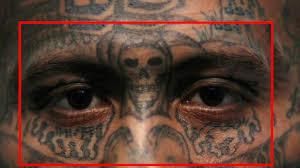 череп значение тату череп с розами вороной и змеей