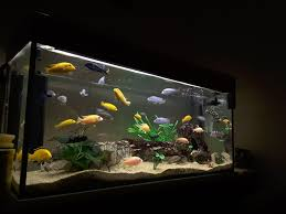 Fish Tank Lights Cheap Understanding Freshwater Aquarium Lighting