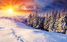 Snow Light Images Rays Of Light Sun Nature Spruce Winter Snow Scenery