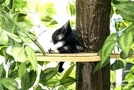 outdoor cat tree house bingo diy