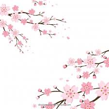 Cherry Blossom Vectors Photos And Psd Files Free Download
