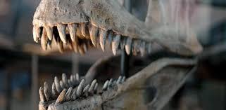 Cada dinosaurio carnívoro tenía sus bocados favoritos