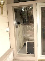 glass dog doors glass pet door brisbane