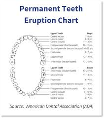 Surprising Tooth Charts Number Charming Baby Teeth Chart