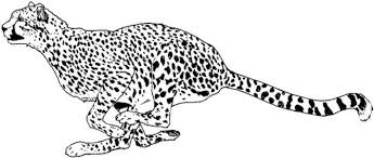 Small Picture Coloring Pages Endearing Cheetah Coloring Page Pages To Print