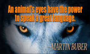 Animal With Quote