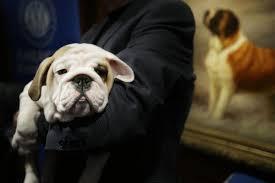 5 puppies worth 30 000 stolen from arizona pet