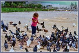 """Résultat de recherche d'images pour """"photo enfant et oiseau"""""""