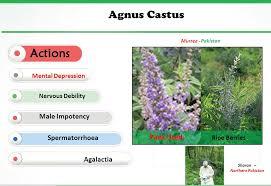 what is agnus castus