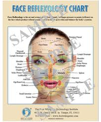 Reflexology Chart Face Reflexology Chart Digital